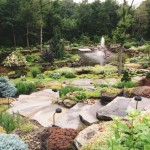 affordable-landscaping