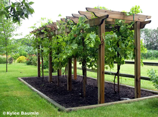 Arbor Designs Ideas 1000 images about pergolas on pinterest pergola designs pergolas and pergola plans Backyard Arbor Ideas Photo 5