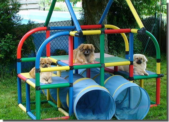 Yard Toys For Dogs : Backyard dog playground photo design your home