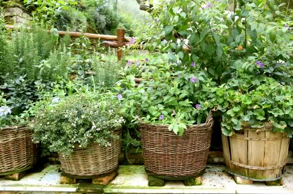 Backyard herb garden