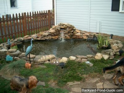 Backyard pond Photo - 1