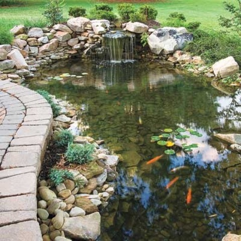 Backyard koi pond ideas large and beautiful photos for Koi pond plant ideas