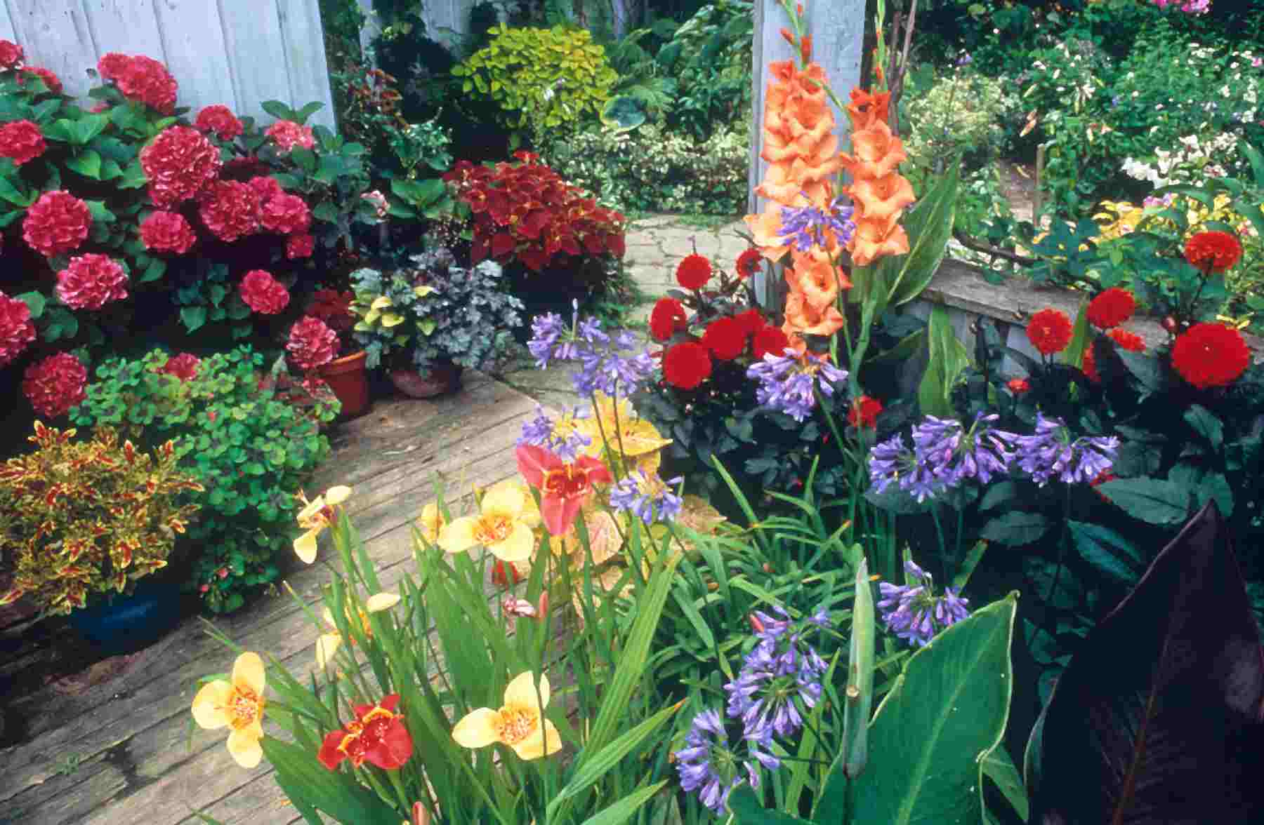 Фото цветов в садах и дачах