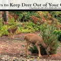 How Do I Keep Deer Out Of My Garden ...