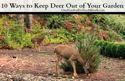 How Do I Keep Deer Out Of My Garden
