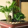 How to create an indoor garden Photo - 1