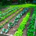 How to design your garden Photo - 1