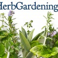 How to grow herb garden Photo - 1