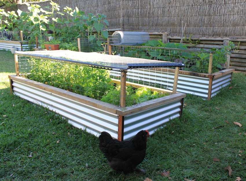 How to make a raised bed garden large and beautiful for Making raised garden beds