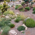 How to make rock garden Photo - 1