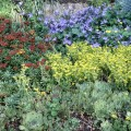 How to plant a rock garden Photo - 1