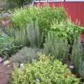 How to plant an herb garden Photo - 1