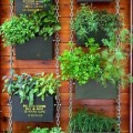 How to plant an herb garden outdoors Photo - 1