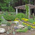How to start a rock garden Photo - 1