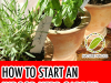 How to start indoor herb garden Photo - 1