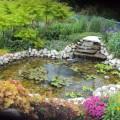 Backyard water gardens Photo - 1