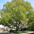 Best backyard trees Photo - 1