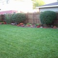 Cheap backyard makeover Photo - 1