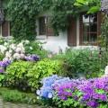 Design a backyard online Photo - 1
