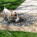 Dog backyard ideas Photo - 1