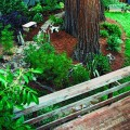 Dog friendly backyard ideas Photo - 1