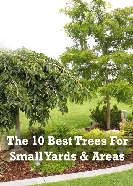 Good Backyard Trees 28 Images Triyae Com Good Shade