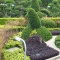 Ideas for backyard landscaping Photo - 1