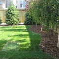 Trees for backyard landscaping Photo - 1