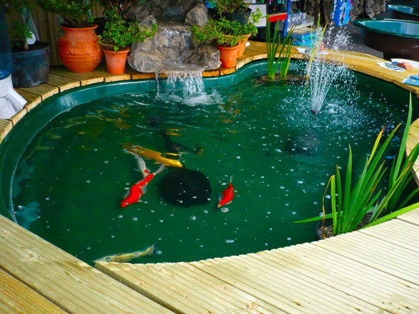 backyard koi pond designs photo - 1