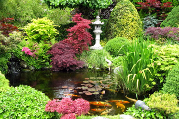 backyard koi pond ideas photo - 1