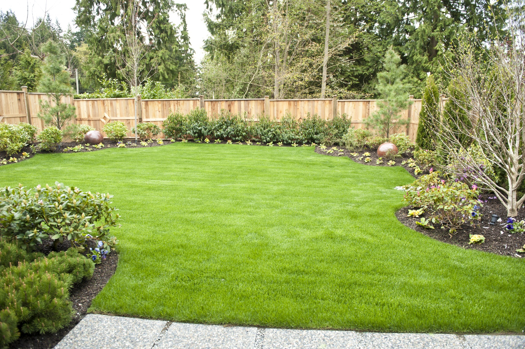 Backyard landscaping for privacy large and beautiful for Backyard privacy landscaping trees