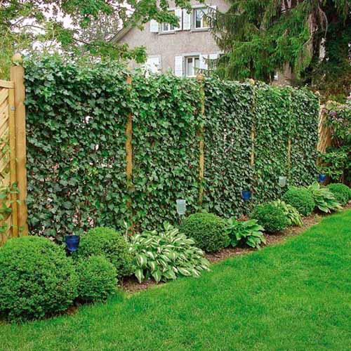 Backyard plant ideas large and beautiful photos Photo to select – Backyard Plant Ideas