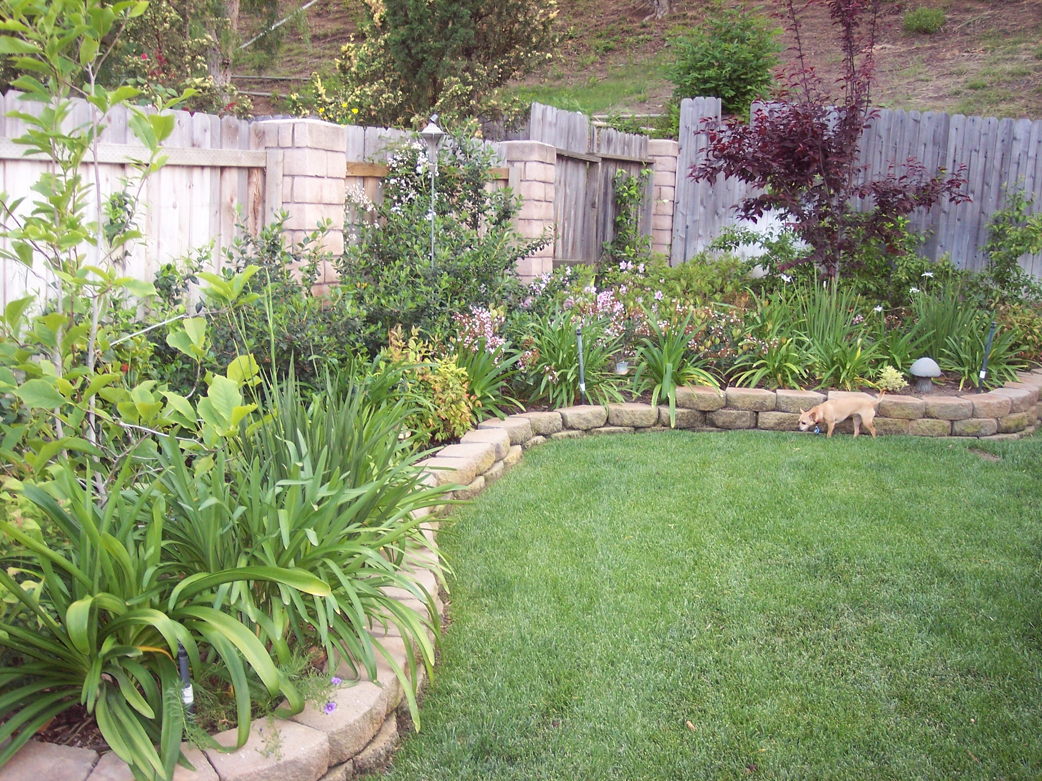 backyard renovation ideas photo - 1