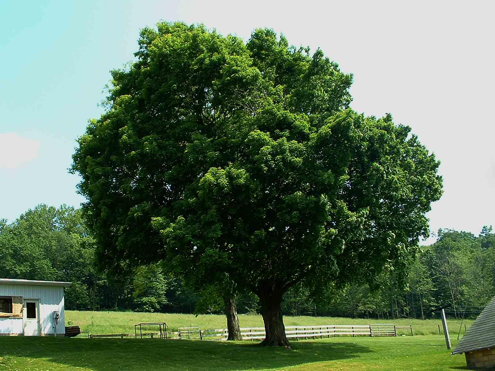 backyard trees large and beautiful photos photo to select