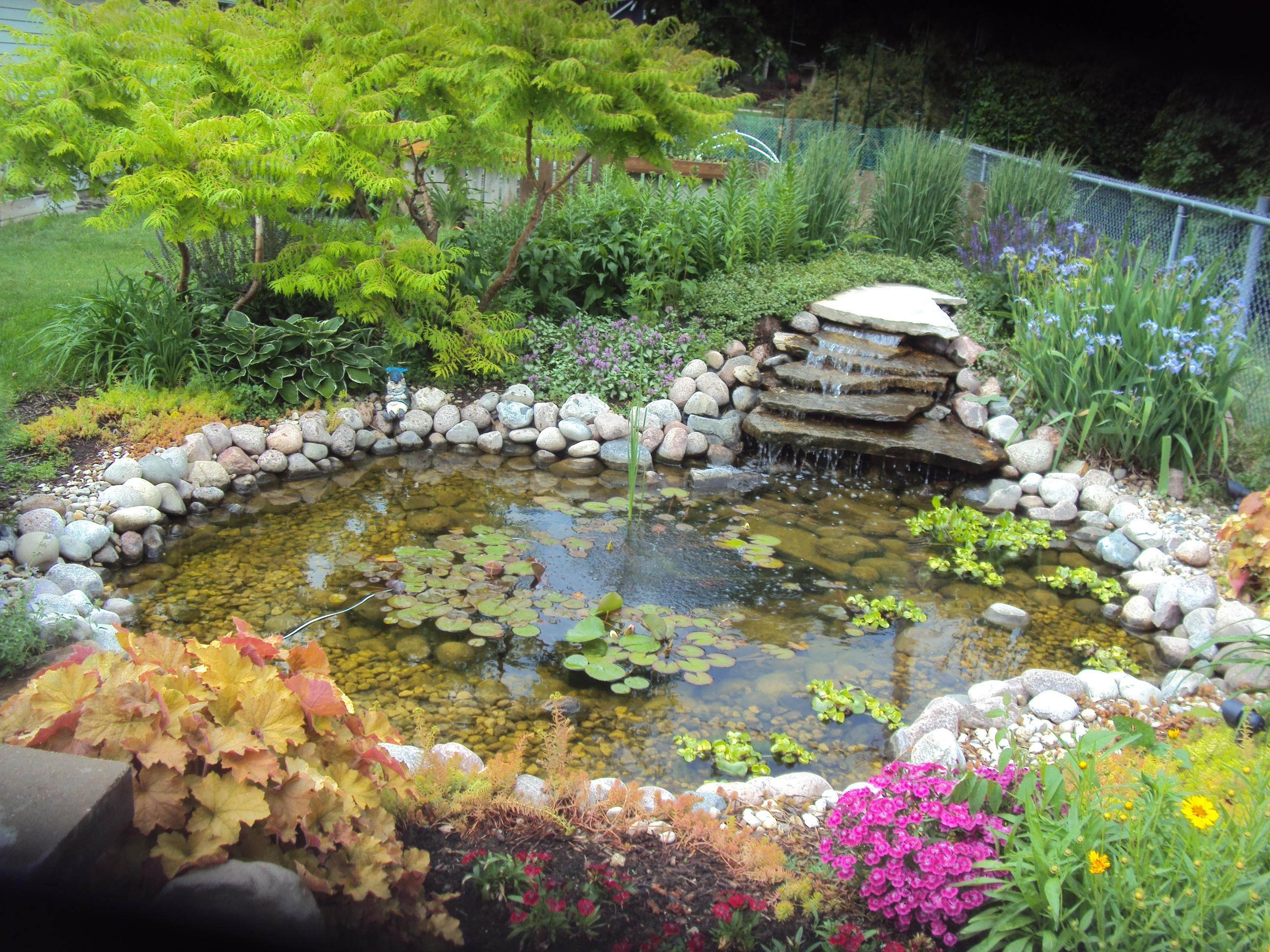 Backyard Water Gardens Large And Beautiful Photos Photo