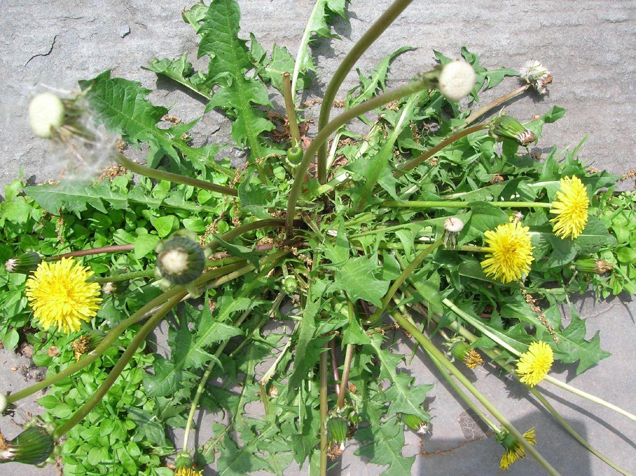 backyard weeds photo - 2