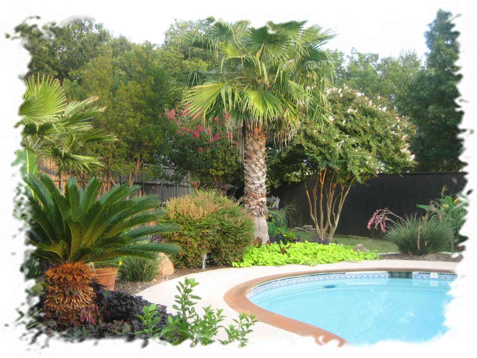 Best tree for backyard - large and beautiful photos. Photo ... Ideas Backyard Resorts on backyard house ideas, backyard sea ideas, backyard lake ideas, backyard spring ideas, backyard tennis ideas, backyard holiday ideas, backyard river ideas, backyard fall ideas, backyard park ideas, backyard ocean ideas, backyard country ideas, backyard catering ideas, backyard construction ideas, backyard family ideas, backyard destination ideas, backyard fitness ideas, backyard winter ideas, backyard outdoor ideas, backyard campground ideas, backyard retreat ideas,