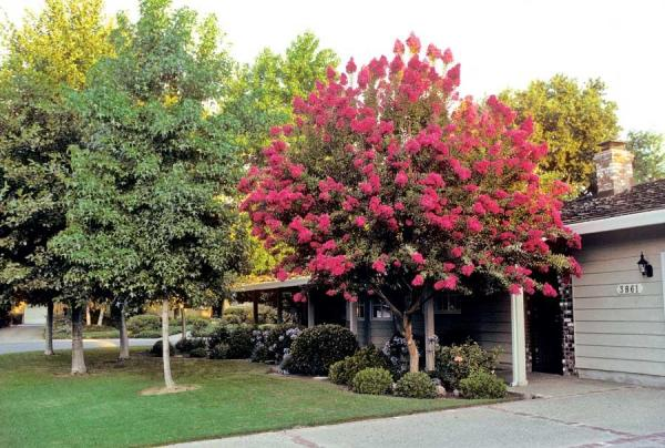 best trees for backyard photo - 2