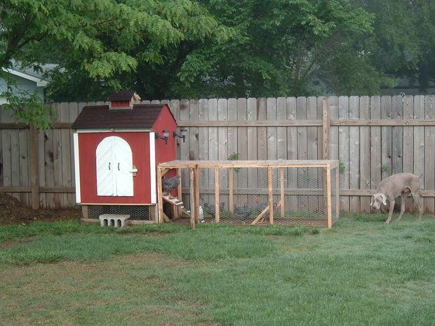 build backyard chicken coop photo - 2