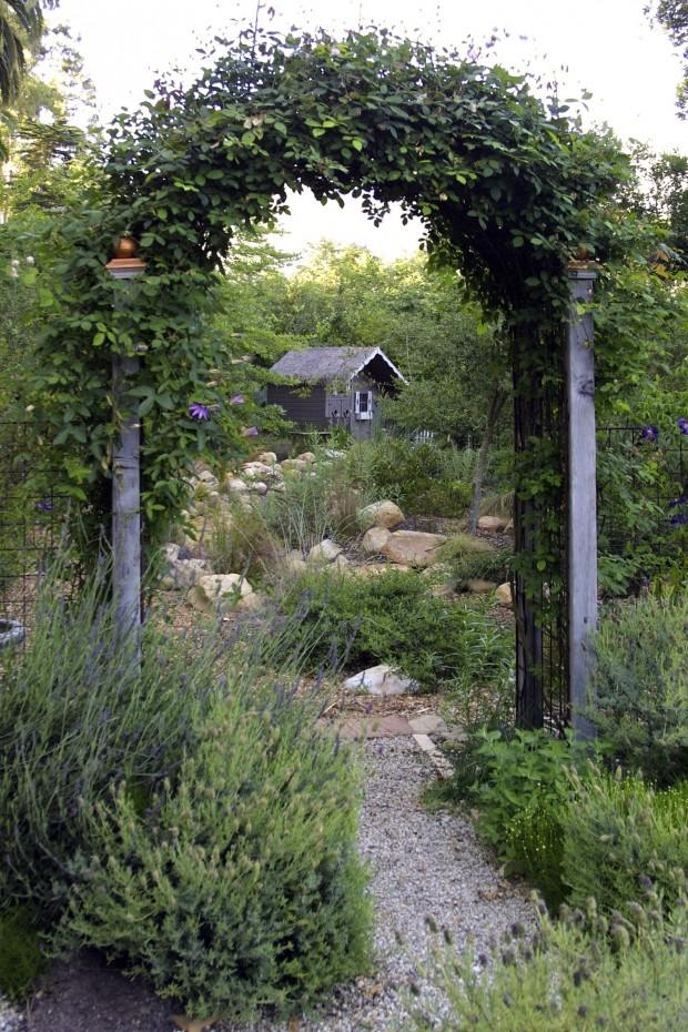 creating backyard privacy photo - 1