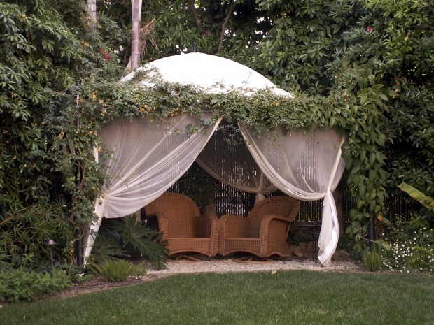 creating backyard privacy photo - 2