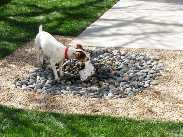 dog backyard photo - 1