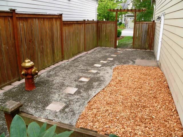 dog backyard photo - 2