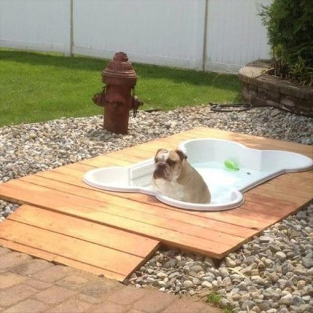 dog backyard ideas photo - 2