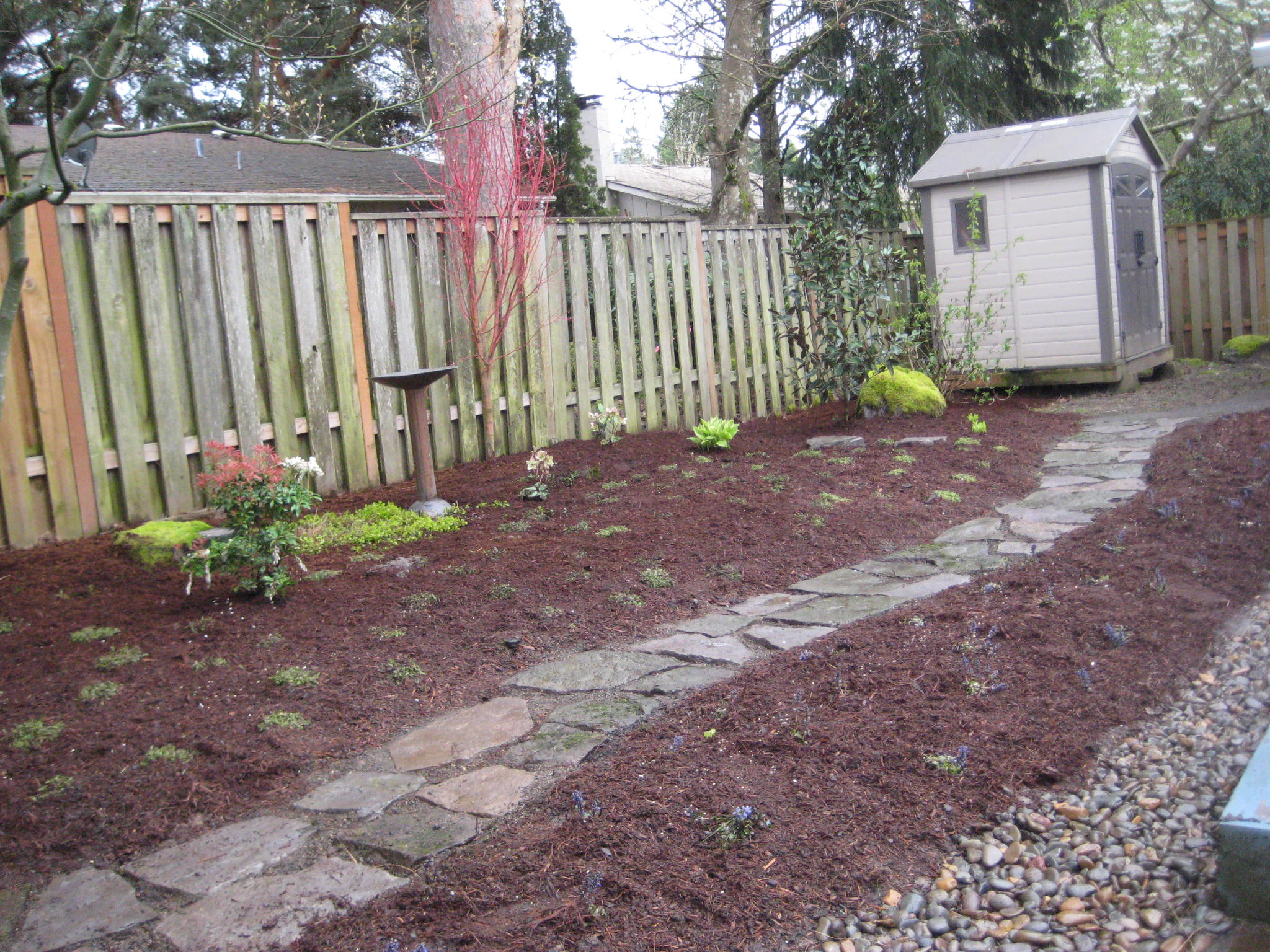 dog friendly backyard ideas photo - 2