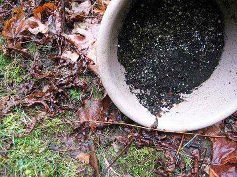 get rid mosquitoes backyard photo - 2