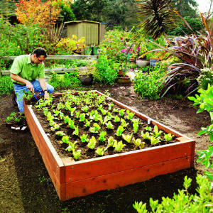how to create a garden bed photo - 1