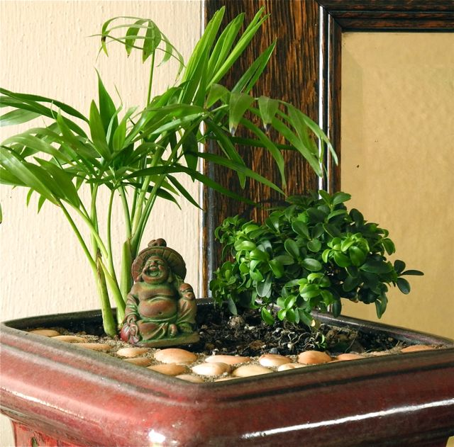 how to create an indoor garden photo - 1