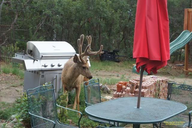 how to deter deer from garden photo - 2