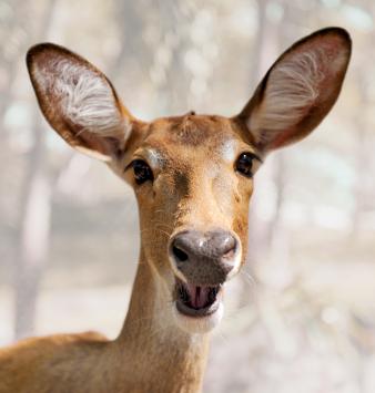 how to deter deer from your garden photo - 2